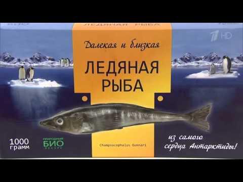 Александр Савельев о ледяной рыбе