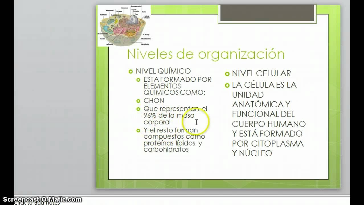 LOS NIVELES DE ORGANIZACION DEL CUERPO HUMANO - YouTube