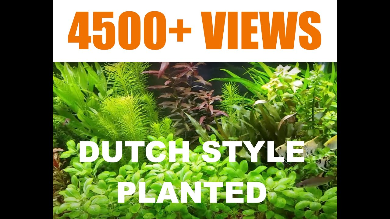 Dutch Aquarium Plants : Dutch Style Planted Aquarium on May 26, 2014 - Watch in HD - YouTube