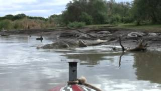 les crocodiles du lac Chamo vers Arba Minch en  Ethiopie 2010