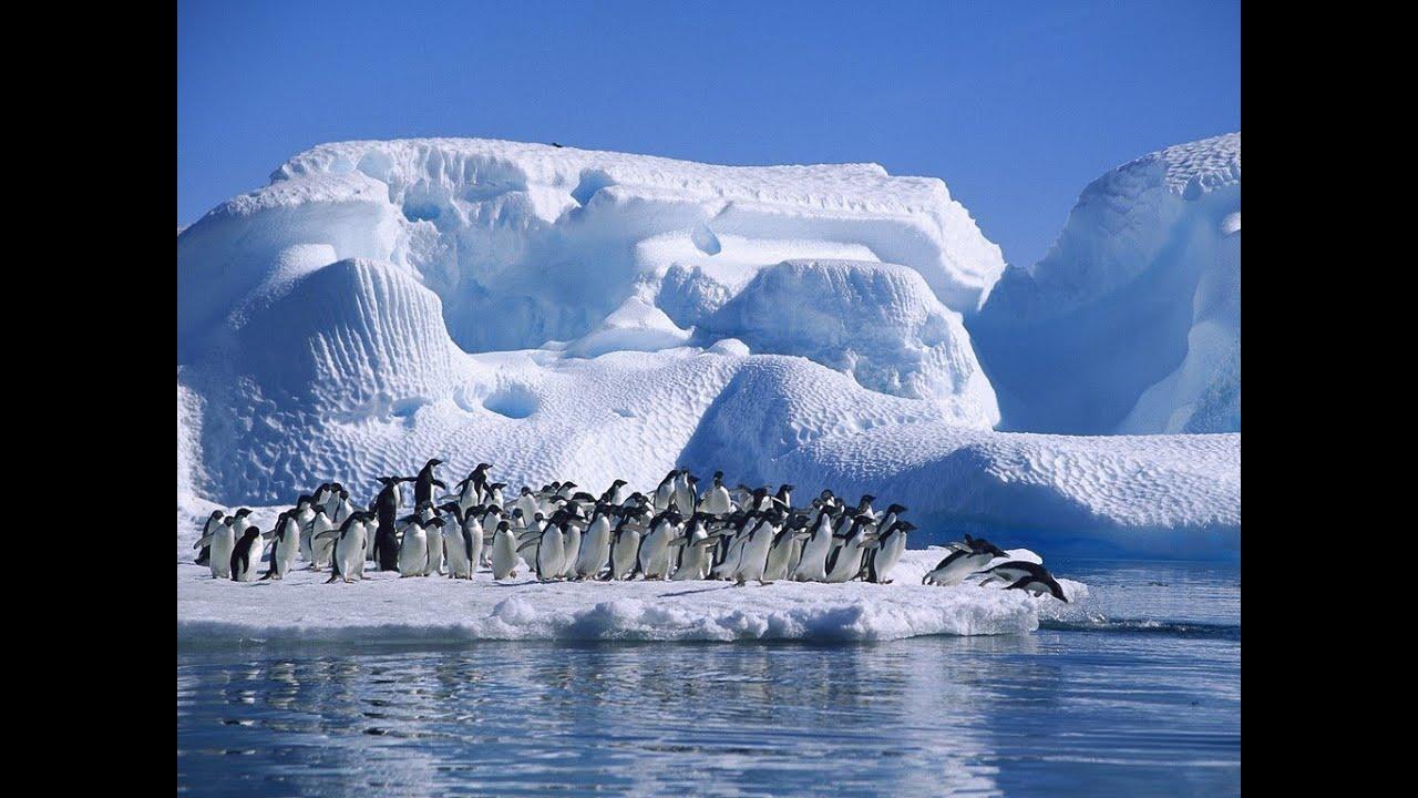 Setelah Meluas Secara Misterius, Es Antartika Kini Meleleh Seluas Empat Kali Prancis