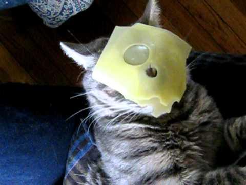 good job cat meme