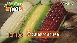 เกษตรไทยไอดอล | EP.136 ตอน ข้าวโพดหวานกินสด | 24 ส.ค.61
