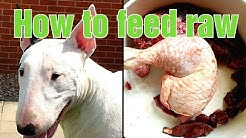 How to feed raw food to dogs - variation is key + ASMR