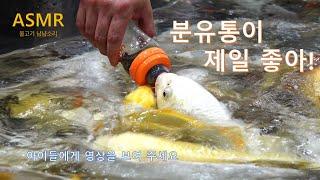 힐링가든/ASMR/물고기 쩝쩝냠냠소리/물고기 먹방/분유…