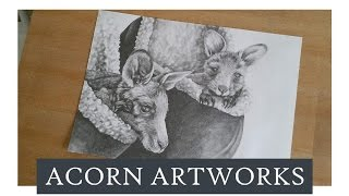 Acorn Artworks - Drawing Kangaroos