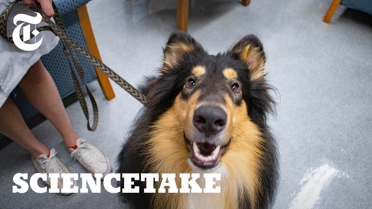 how-empathetic-is-your-dog-sciencetake