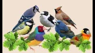 Внутреннее строение птиц. Биология 7класс