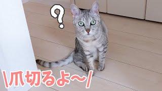 久々に爪切りをする猫たちの反応がこちらです!