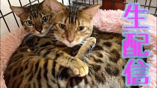 【生配信5/2】GWはおうちで猫でも見て過ごしませんか?生配信