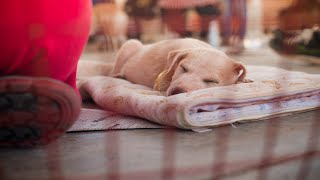 Post Lockdown Pet Adoption Drive