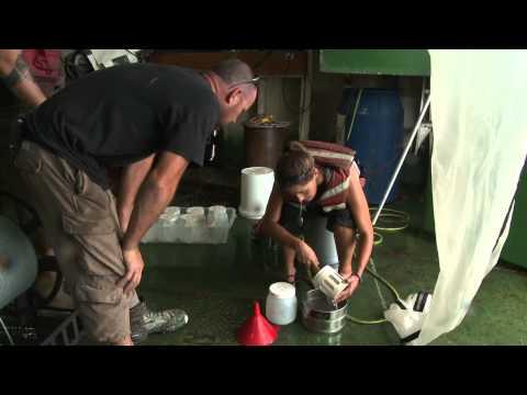 Oil Spill Truth: Sampling Blue Crab Larvae