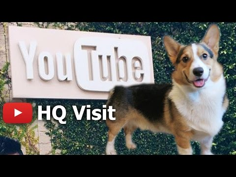 CORGI DOG'S TOUR of YOUTUBE HEADQUARTERS - Life After College: Ep. 450