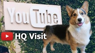 CORGI DOG'S TOUR of YOUTUBE HEADQUARTERS - Life After College: Ep. 450 thumbnail