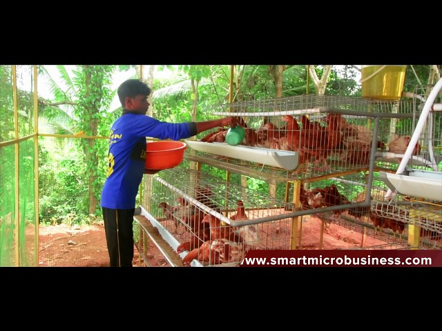 Smart Mini poultry cages system