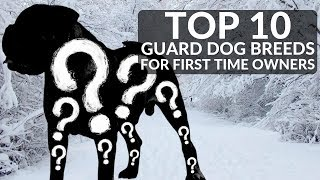 TOP 10 GUARD DOGS FOR FIRST TIME OWNERS Whats The Best Guard Dog Breed For Novices