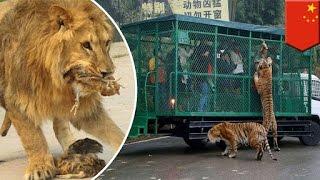 Popular Videos - Zoo & Pets