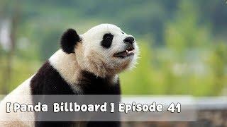 【Panda Billboard】Episode 41 | iPanda