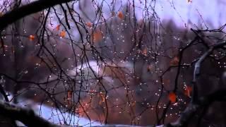 가을 가랑비