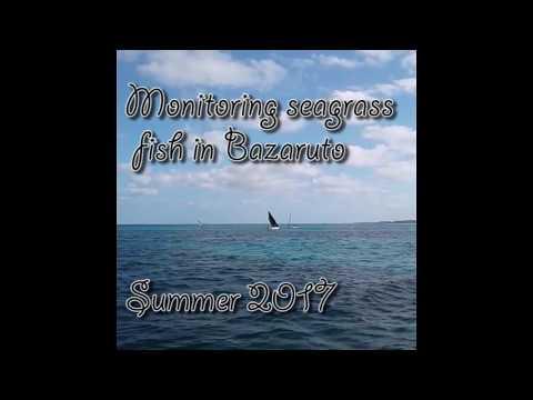 Baited Remote Underwater Video Survey - Bazaruto