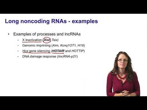 7.   Noncoding RNAs   long noncoding RNAs introduction