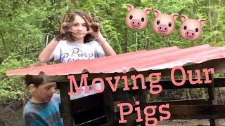 Homesteading: Moving Pigs