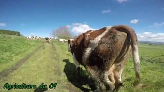 Sortie des vaches 2k17 [GOPRO]