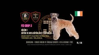 TKC FCI GRUP 3 Terrier Kennel Club