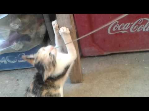 funny kittens playing.