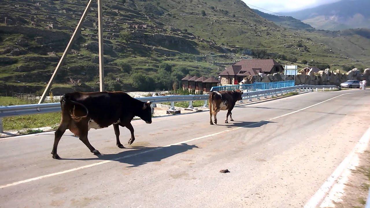 Как мычит корова звук скачать