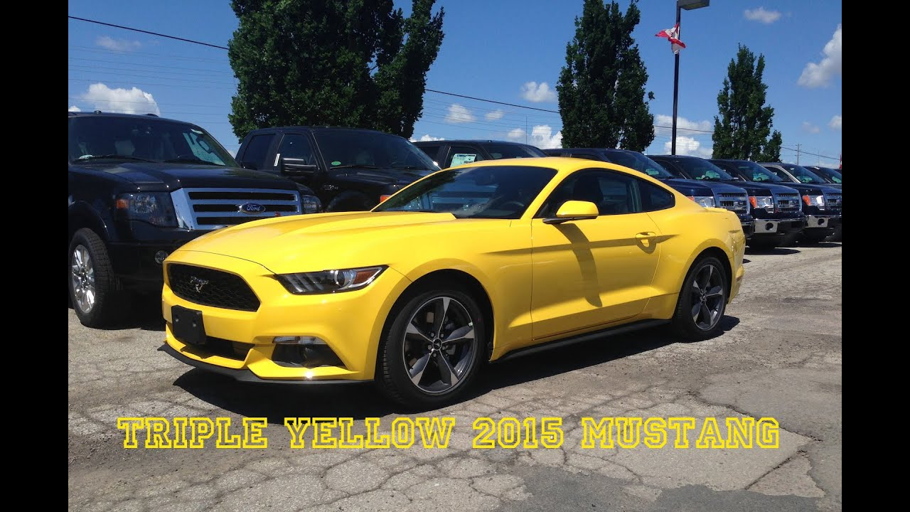 2015 Triple Yellow Mustang On The Lot Youtube