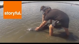 Quick-Thinking Teenagers Rescue a Baby Dolphin (Storyful, Inspiring)