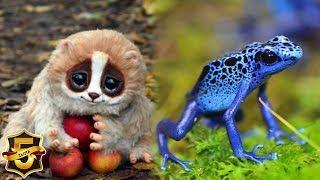 5 słodkich zwierząt, które MOGĄ CIĘ ZABIĆ!