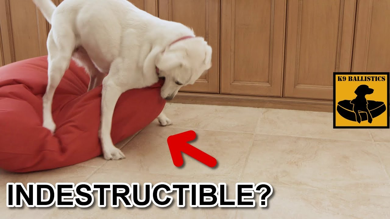 orthopedic mhl bed review kopeks foam indestructible memory dog