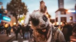 Halloween Horror Festival 2019 - All 8 Mazes - Movie Park Germany