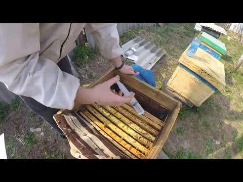 Результаты обработки пчел от клеща Далабиком