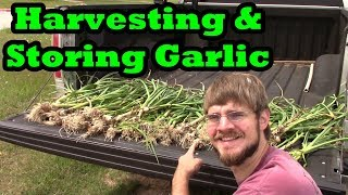 How And When To Harvest And Store Garlic!