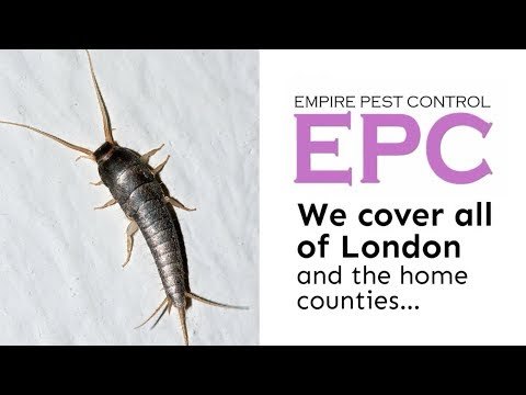 SILVERFISH TREATMENT LONDON UK ~ HOW TO GET RID OF SILVERFISH ~ EMPIRE PEST CONTROL LONDON