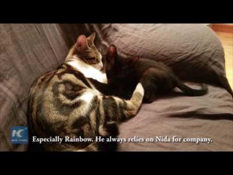 Wow! A neuter cat feeds its baby friend milk?