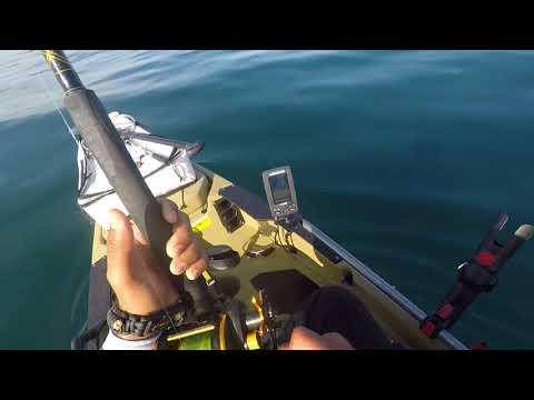 Yellowtail Fishing La Jolla 50LBS!!!