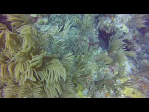 Scuba Diving Saint Thomas Congo