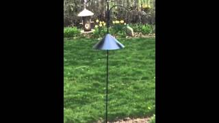 Audubon Squirrel Baffle - This Thing Works