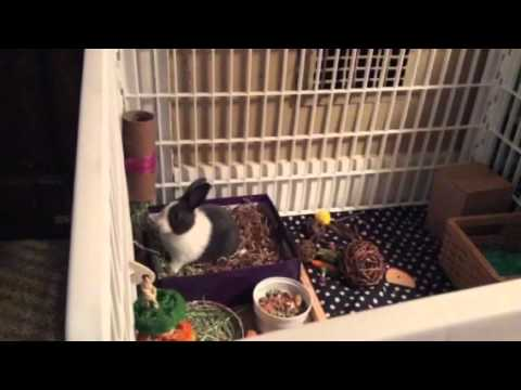 Potty training your bunny - YouTube