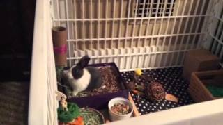 Potty training your bunny