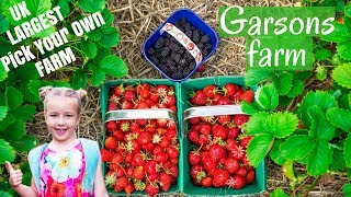 Garsons Farm - UK Largest Pick Your Own farm