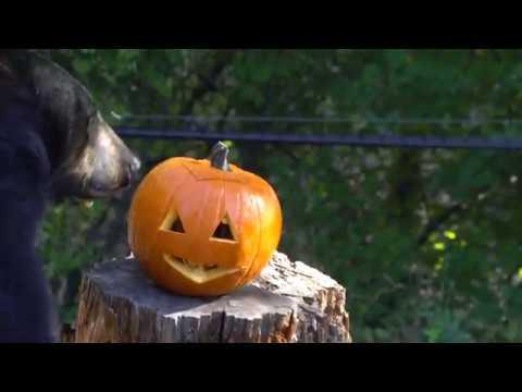 Stuart Langston - Who Doesn't Love Animals & Pumpkins?