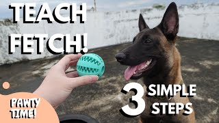 How To Teach Fetch In 3 Simple Steps!