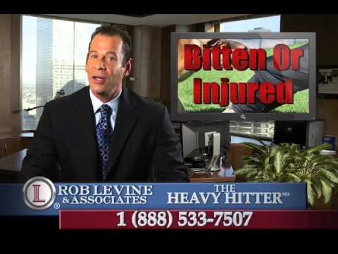 Dog Bite Lawyer -  Winchester, CT