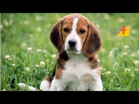 Curso Adestramento de Cães - Comandos Senta e Deita