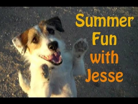 Summer Fun with Jesse the Jack Russell